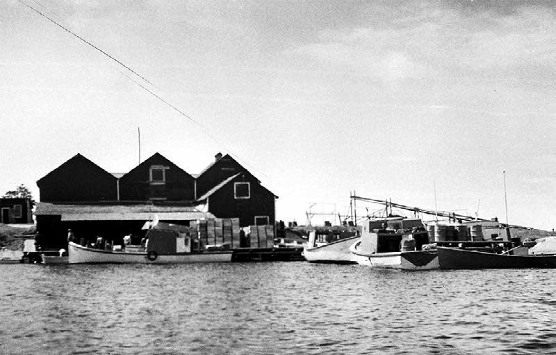 A classic picture of a Lake Winnipeg Fish Station taken in 1954 at The Sigurdson Fisheries Station in Berens River 1954. The Black River Station, while different, would have looked similar in many ways with the ice houses, the docks, the boats and the fish boxes.